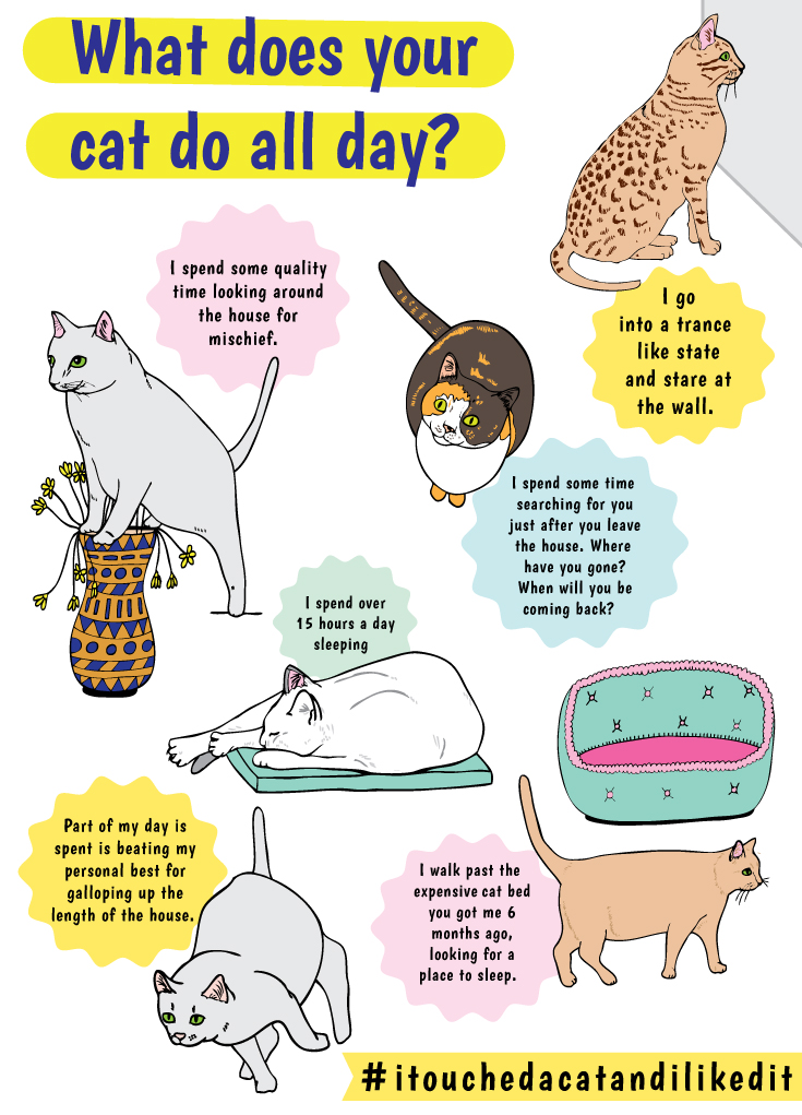 what does your cat do all day? From i touched a cat and i liked it the ultimate book for cat lovers by anna blandford
